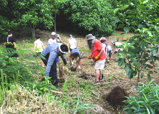 Volunteers clearing and planting on the north side